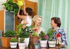 Pensionistas mayores y muchacha que cuidan para las plantas caseras Imagen de archivo libre de regalías
