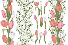 Pensionistas sem emenda com elementos da tulipa ilustração royalty free