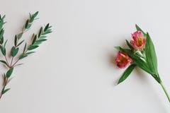 Pensionnaire avec Copyspace et fleur Photo libre de droits