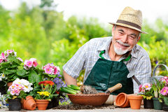 Pensionär i blommaträdgården Arkivfoton
