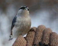 Pensive bird Royalty Free Stock Photography