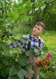 Nuts in the hands of a boy in the woods boy, nature, garden, child, young, green, outdoors, summer, plant, gardening, flower, gras Royalty Free Stock Images