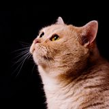 Pensive cat Royalty Free Stock Images