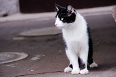 A pensive cat Stock Images