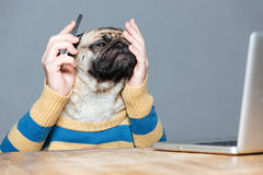Pensive desperate pug dog with man hands using smartphone. Pensive desperate pug dog with man hands in striped sweater using smartphone and covered face by hand stock images