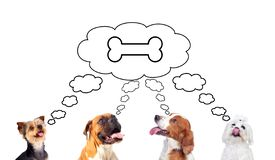 Pensive dogs looking up royalty free stock image