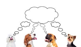 Pensive dogs looking up royalty free stock images