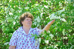 Pensive elderly woman in  spring nature with cherry flowers Royalty Free Stock Photos