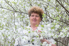Pensive elderly woman in spring nature with cherry flowers Stock Image