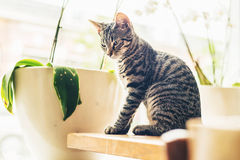 Pensive grey tabby cat sitting in the sun Royalty Free Stock Photos