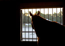 Pensive Horse Stock Image