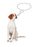 Pensive hunting dog Stock Photo