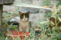 Pensive kitten in the grass Royalty Free Stock Photo