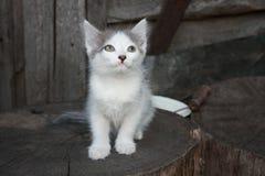 Pensive kitten on a wood stump. Pensive dreaming white-gray cat on a wood stump Stock Photo