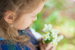 Pensive little girl holding a bouquet of chamomile in the spring. Cute little girl holding a bouquet of daisies in the spring royalty free stock image