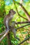 A pensive lonely monkey sits on a fence in the shade. Of a tree royalty free stock images