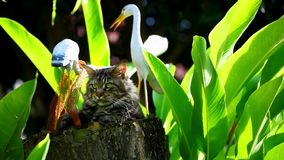 Pensive Maine Coon cat sitting on a tree stump Stock Photography