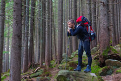 Pensive Male Hiker Staying on Stone in Forest Stock Photos