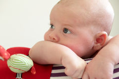 Pensive newborn boy lying on a crawling roll Royalty Free Stock Photos