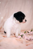 Pensive Puppy on a pink background Royalty Free Stock Photo