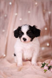 Pensive Puppy on a pink Stock Photos