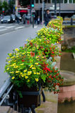 Penstemon in a street decoration in Strasbourg Stock Photography