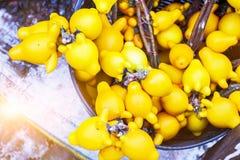Pentagon eggplant. The yellow pentagon eggplants in Metallic container Royalty Free Stock Photos