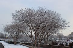 Pentagon memorial on a beautiful snow day. The trees covered snow with my favorite seance Stock Image
