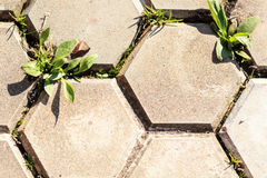 Pentagon tiles pavement. Paved pentagon blocks with grass growing through stock image