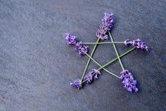 Pentagram - μάγισσα, Wicca, ειδωλολατρικό σύμβολο φιαγμένο από lavender ακίδες λουλουδιών στο γκρίζο/γκρίζο κλίμα πλακών στοκ εικόνες με δικαίωμα ελεύθερης χρήσης