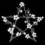 Pentagrama znak robić z gałąź od kwitnącego drzewa E royalty ilustracja