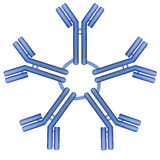Pentamer αντισωμάτων IgM μόριο Στοκ Εικόνες