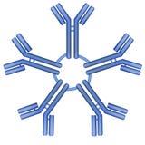 Pentamer van het IgMantilichaam molecule Stock Afbeeldingen