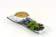 Pentaphyllum chinois Thunb Makino de Gynostemma de nom de Jiaogulan Images libres de droits