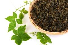 Pentaphyllum chinois Thunb Makino de Gynostemma de nom de Jiaogulan sec et feuilles Images stock