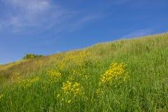 Pente d'une colline verte et d'un ciel clair bleu Photos libres de droits