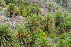 Pente de colline avec des palmiers Photo stock