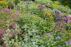 Pente de floraison riche, plantée avec le géranium, le saponaria, le stachys et le fumewort images stock