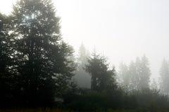 Pente de montagne boisée en bas nuage menteur avec les conifères à feuilles persistantes enveloppés en brume dans une vue scéniqu Photographie stock libre de droits