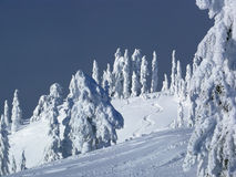 Pente de ski avec les pistes fraîches Photo libre de droits