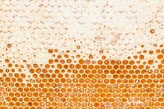 Pente do mel da abelha fotografia de stock royalty free