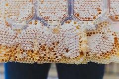 Pente especial do mel, fim acima, fluindo, abelha-jardim, produtos naturais, apiário atrás das calças de brim imagem de stock