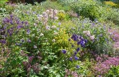 Pente végétée dans le jardin avec le saponaria, le géranium, le corydalis et d'autres pluriannuels photo libre de droits