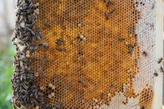 Pente velho da cera de abelha Fotos de Stock