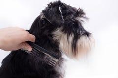 Penteando o cão bonito fotografia de stock royalty free