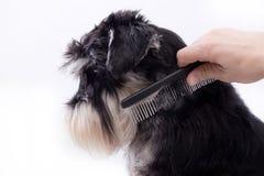 Penteando o cão bonito imagem de stock royalty free