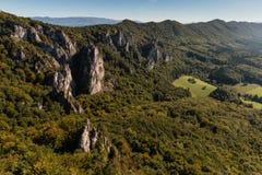 Pentes boisées en montagnes carpathiennes Image libre de droits