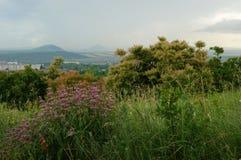 Pentes de montagne et collines vertes avec des fleurs de Motherwort Image stock
