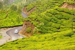 Pentes de peluche des collines de thé photos stock
