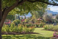 Rose garden and gazebo framed by tree in summer Royalty Free Stock Photos